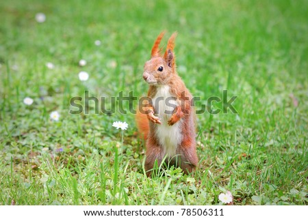 cute squirrel standing on the grass with flowers