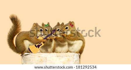 Cute squirrels perched on a log, eating seeds, while one of the boys plays guitar for them.  Part of a fun series. - stock photo