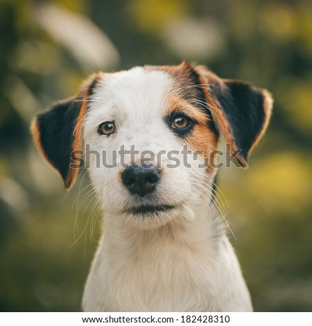 Cute Stray Dog - stock photo