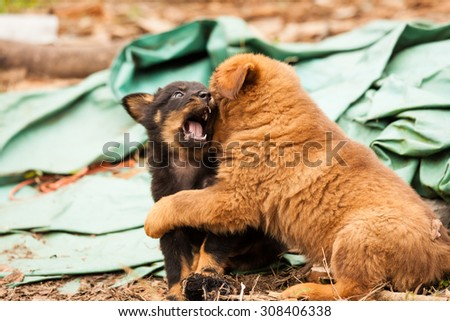 Cute stray puppies playing - stock photo