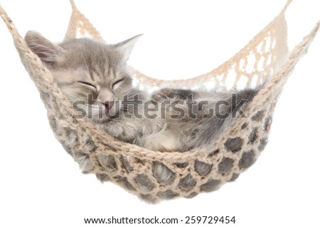 Cute striated kitten sleeping in hammock on a white background. - stock photo