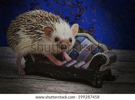 cute sweet hedgehog baby - stock photo