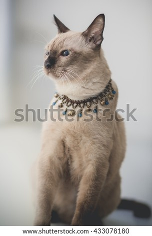 Cute tabby cat at home - stock photo