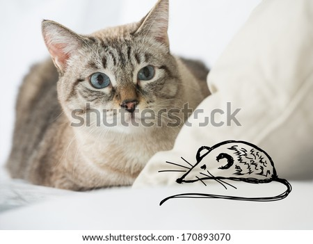 Cute tabby cat at home - laying on sofa and hunting on fake drawing mouse - stock photo