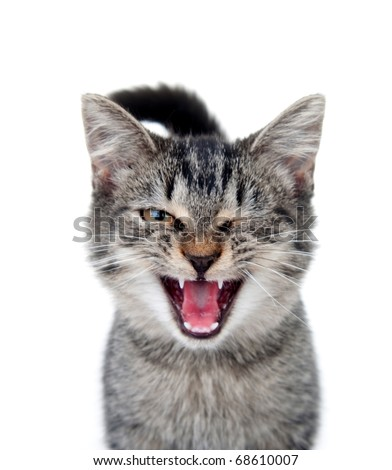 Cute tabby cat crying with one eye closed on white background - stock photo