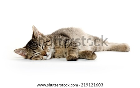 Cute tabby cat laying down and resting on white background
