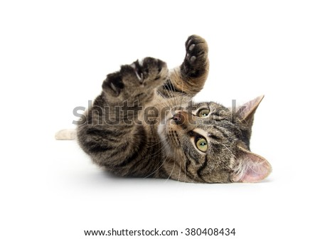 Cute tabby cat laying down isolated on white background