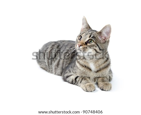 Cute tabby cat laying down on white background - stock photo