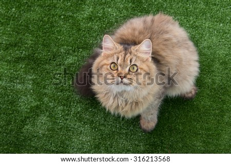 Cute tabby cat lying on green grass - stock photo