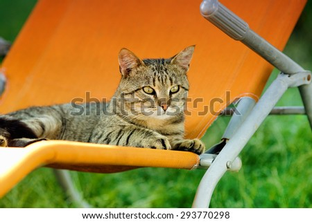 Cute tabby cat lying on orange sunbed and staring in one direction - stock photo
