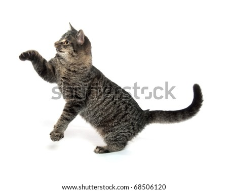 Cute tabby cat on white background - stock photo