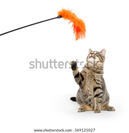 Cute tabby cat playing and jumping isolated on white background