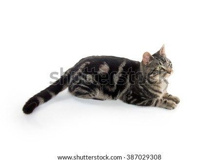 Cute tabby cat playing down isolated on white background