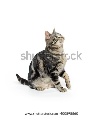 Cute tabby cat sitting isolated on white background