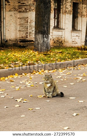 Cute tabby cat sitting on the road among the fallen leaves and looking thoughtfully into the distance - stock photo