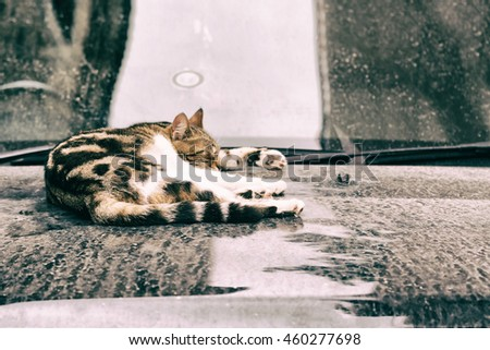 Cute tabby cat sleeps on a dirty car hood - stock photo