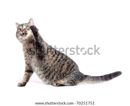 Cute tabby cat swinging its paw and playing on white background