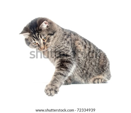 Cute tabby cat swinging its paw on white background - stock photo