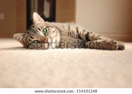 Cute tabby cat with green eyes laying on carpet - stock photo