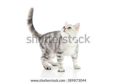 Cute tabby kitten on white background isolate - stock photo