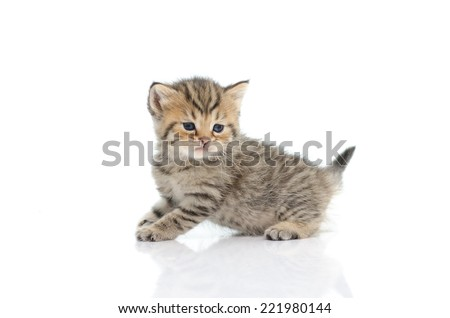 Cute tabby kitten  on white background isolated