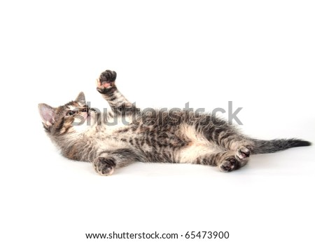 Cute tabby kitten playing on white background - stock photo