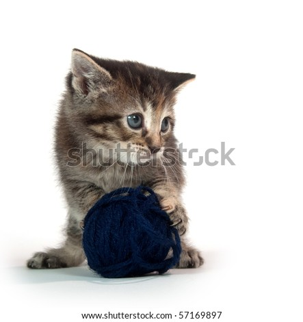 Cute tabby kitten playing with ball of blue yarn on white background - stock photo