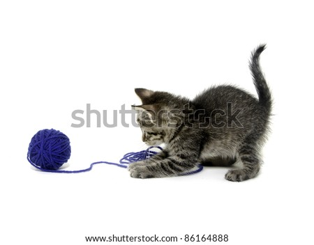 Cute tabby kitten playing with blue ball of yarn on white background - stock photo