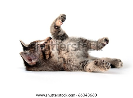 Cute tabby kitten rolling and playing on white background - stock photo