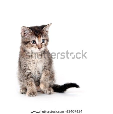 Cute tabby kitten sitting on white background - stock photo