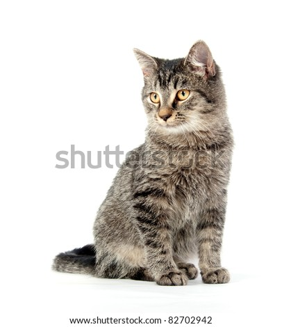 Cute tabby kitten sitting on white background