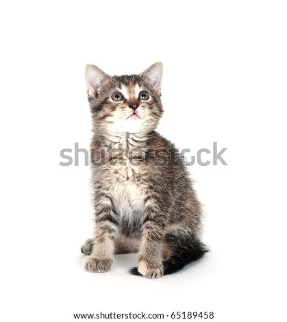 Cute tabby kitten sitting on white background and looking up