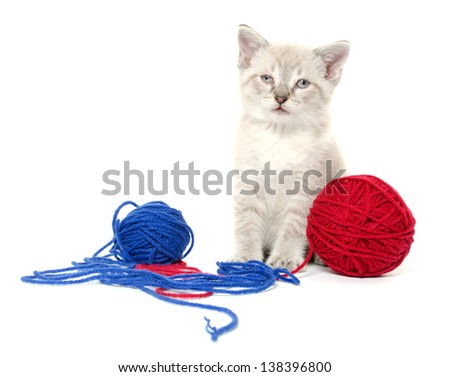 Cute tabby kitten with ball of yarn on white background - stock photo