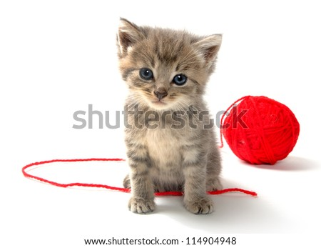 Cute tabby kitten with red ball of yarn on white background - stock photo