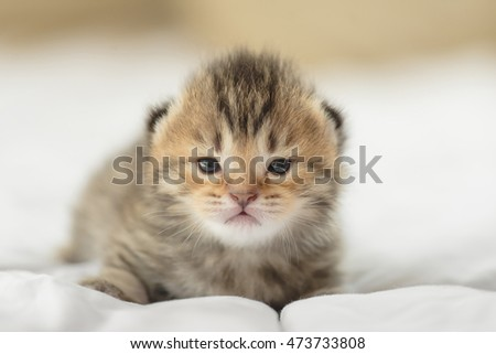 Cute tabby kittens lying on bed