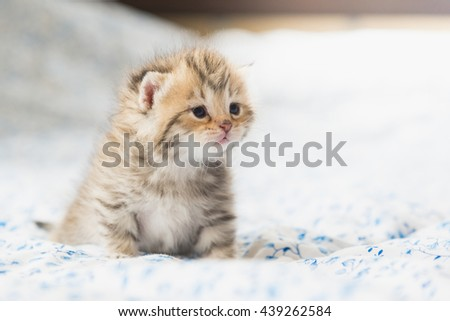 Cute tabby kittens sitting on bed - stock photo