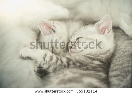 Cute tabby kittens sleeping with mother - stock photo
