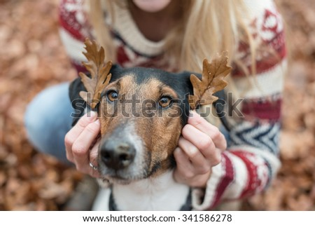 Cute terrier dog playing outdoor, two leaves on his ears. - stock photo