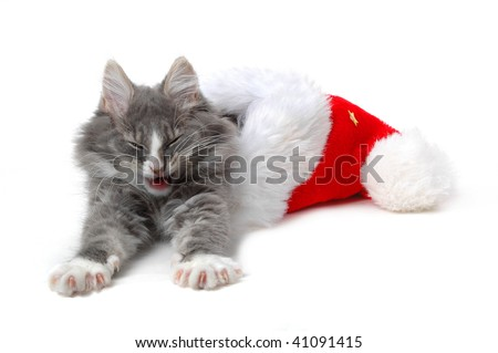 cute tired kitten with christmas bonnet