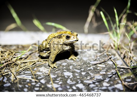Cute toad.