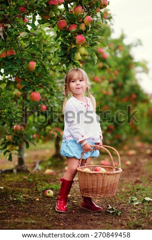 cute toddler girl picking fresh apples at sunny day on a organic farm