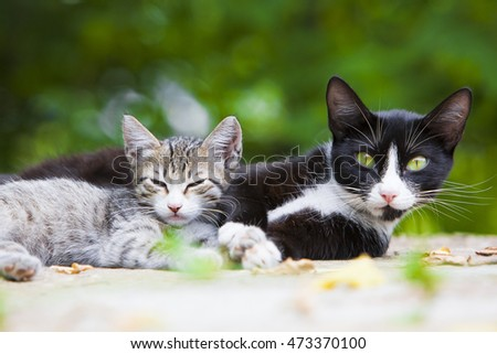 Cute tricolor kitten with his mother