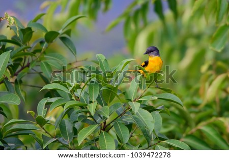 cute tropical bird perched on tree canopy & Birds Canopy Trees Stock Images Royalty-Free Images u0026 Vectors ...