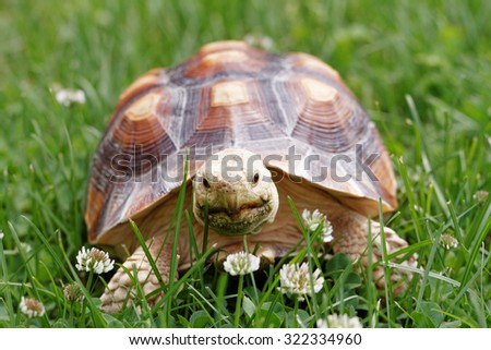 Cute turtle crawling on the green grass - stock photo