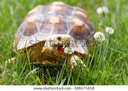 Cute turtle crawling on the green grass