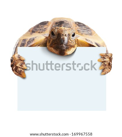 Cute turtle holding  a blank white board isolated on white - stock photo