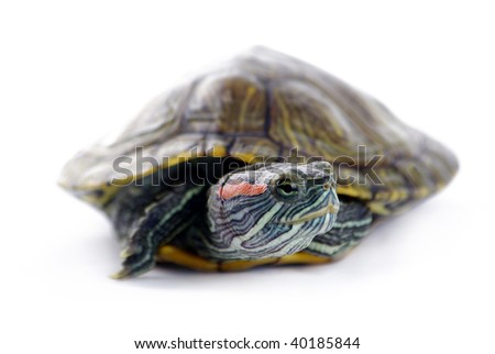 Cute turtle over white background