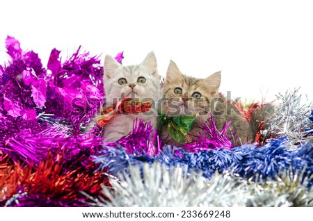 Cute  two tabby kitten sitting in colorful tinsel on white background