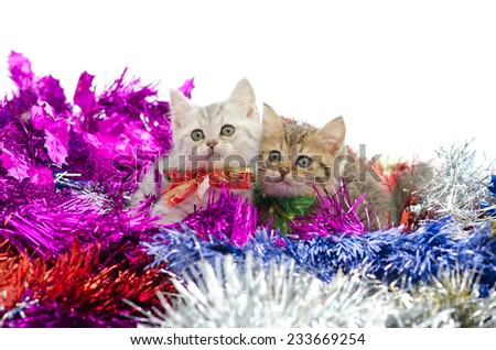 Cute  two tabby kitten sitting in colorful tinsel on white background - stock photo