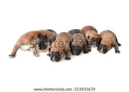 Cute very young  puppies relaxing on white